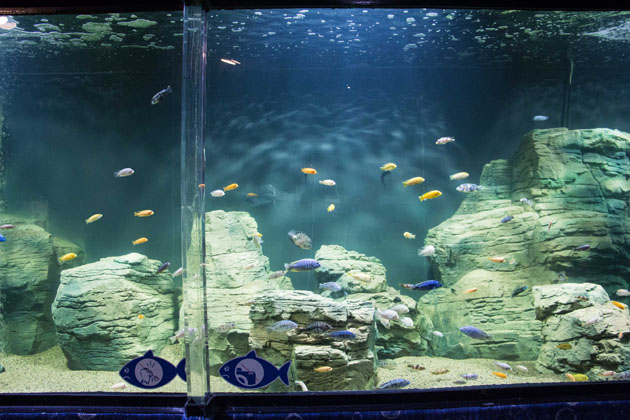 Океанариум в Казани