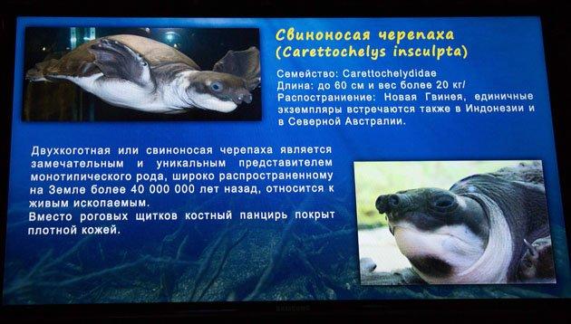 Обзор Океанариума в Казани (88 фото)