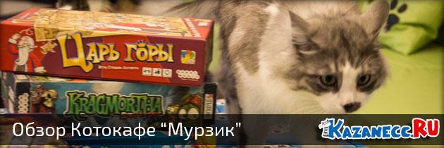 "Котокафе ""Мурзик"" в Казани (19 фото)"