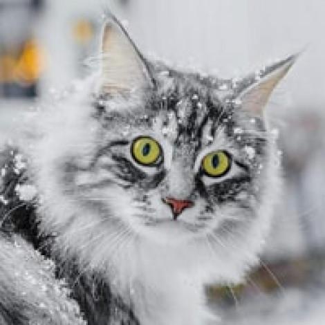 Куда сходить на новогодние праздники в Казани?