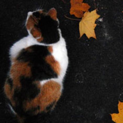 «Как быстро блин настала осень…»